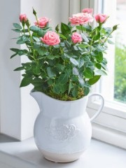 Country Style Pink Rose Jug